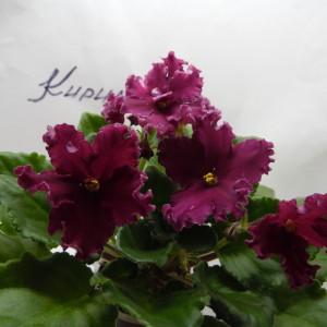ЛЕ — Лето Красное фото